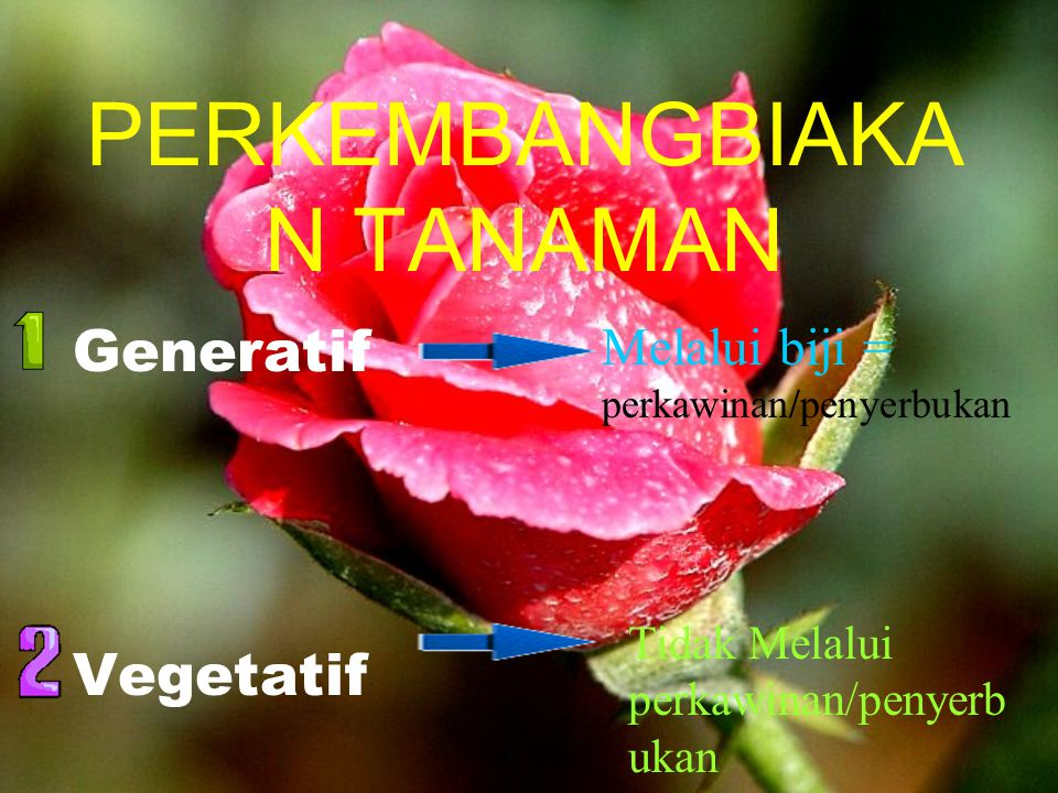 PERKEMBANGBIAKAN TANAMAN Prihantono-Jl. Segaluh 20 Dampit