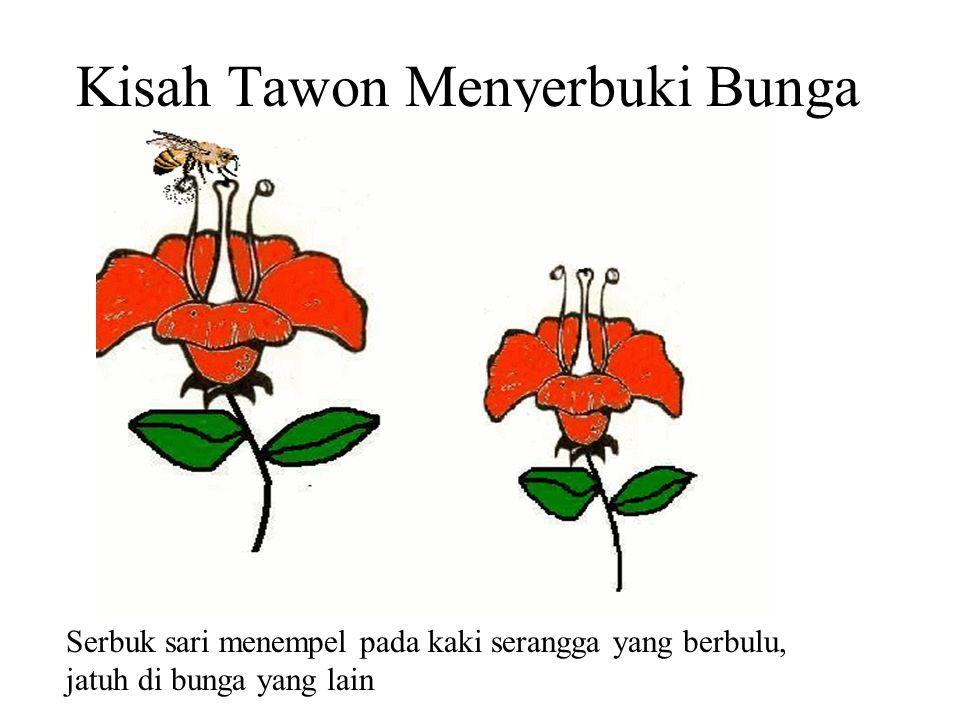 Para Pembantu Penyerbukan Jatuhnya serbuk sari pada kepala putik bisa dibantu oleh angin, serangga, burung, mamalia, atau manusia