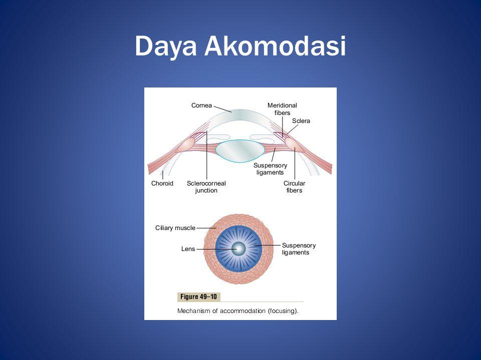 Pemeriksaan Tajam Penglihatan • Objektif – Retinoskopi • Subjektif – Snellen Chart