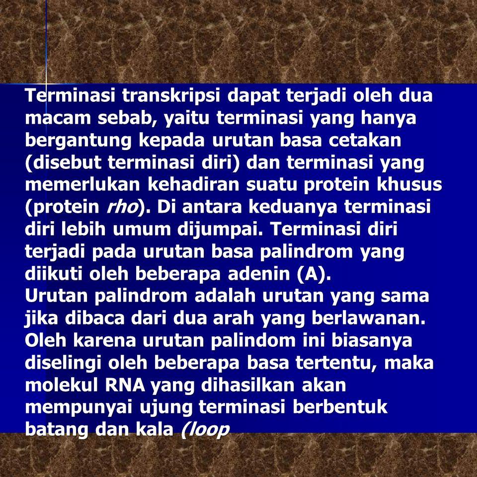 Terminasi transkripsi dapat terjadi oleh dua macam sebab, yaitu terminasi yang hanya bergantung kepada urutan basa cetakan (disebut terminasi diri) dan terminasi yang memerlukan kehadiran suatu protein khusus (protein rho).