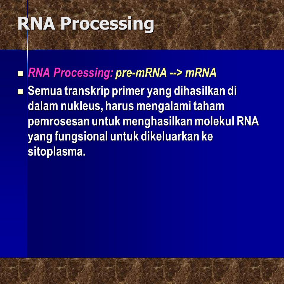 RNA Processing  RNA Processing: pre-mRNA --> mRNA  Semua transkrip primer yang dihasilkan di dalam nukleus, harus mengalami taham pemrosesan untuk m