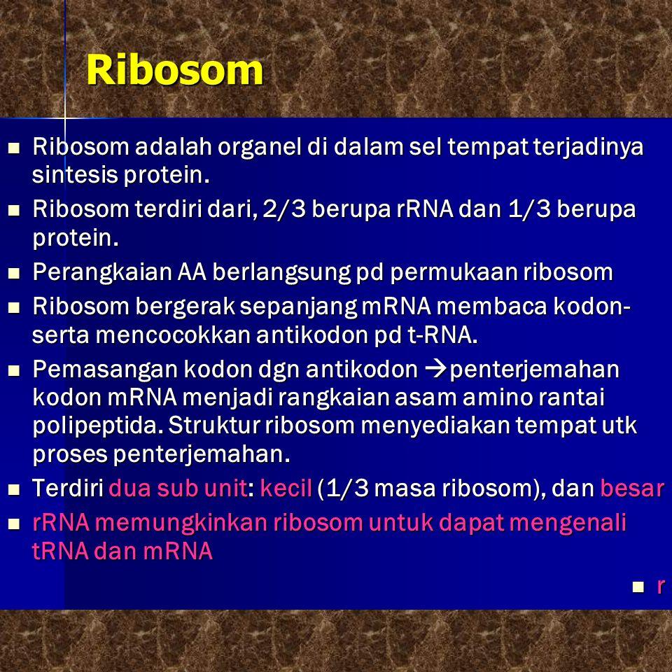 Ribosom  Ribosom adalah organel di dalam sel tempat terjadinya sintesis protein.  Ribosom terdiri dari, 2/3 berupa rRNA dan 1/3 berupa protein.  Pe