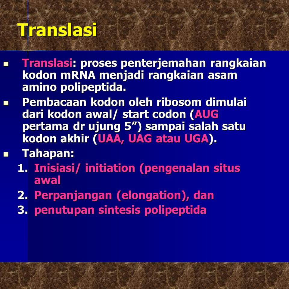 Translasi  Translasi: proses penterjemahan rangkaian kodon mRNA menjadi rangkaian asam amino polipeptida.
