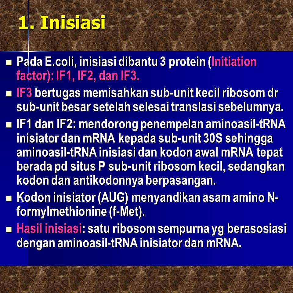 1. Inisiasi  Pada E.coli, inisiasi dibantu 3 protein (Initiation factor): IF1, IF2, dan IF3.  IF3 bertugas memisahkan sub-unit kecil ribosom dr sub-