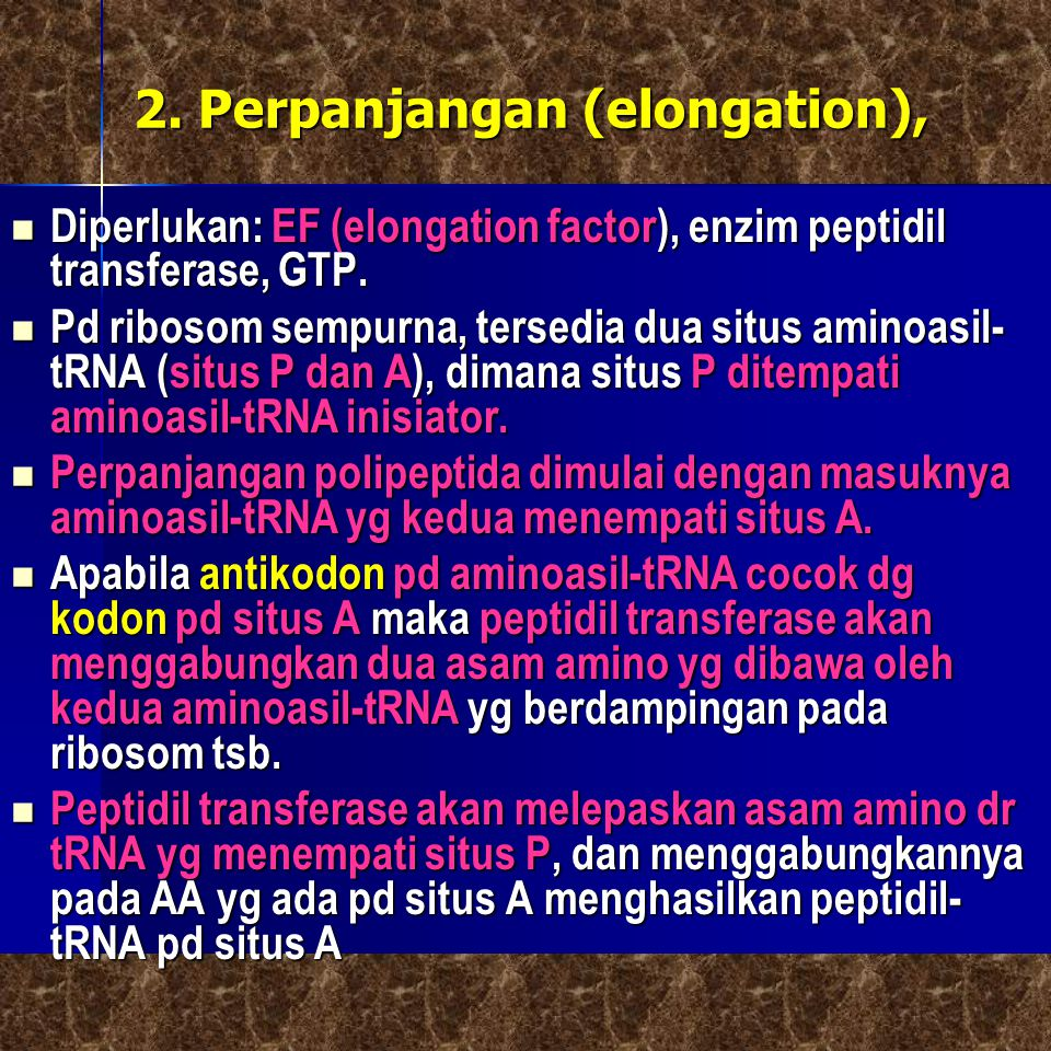 2. Perpanjangan (elongation),  Diperlukan: EF (elongation factor), enzim peptidil transferase, GTP.  Pd ribosom sempurna, tersedia dua situs aminoas