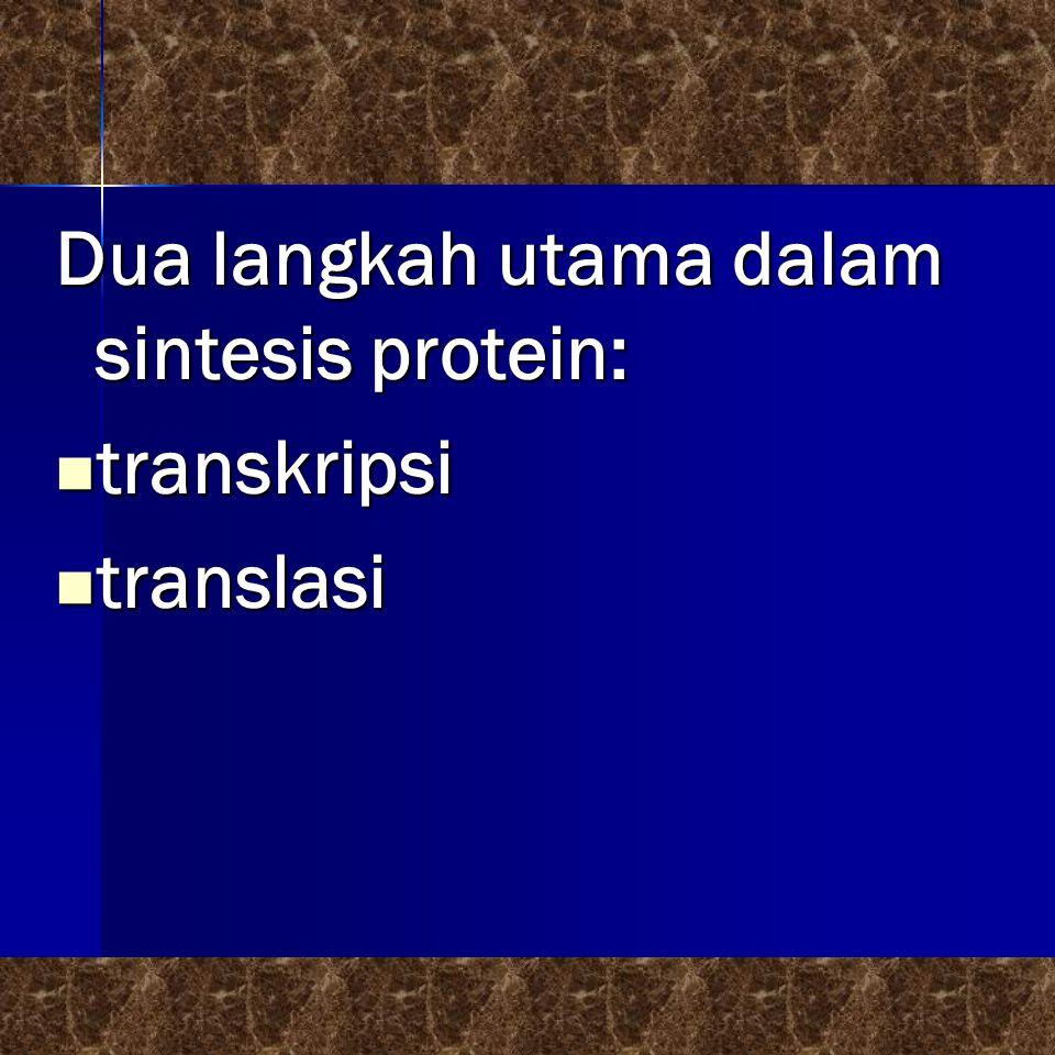Dua langkah utama dalam sintesis protein:  transkripsi  translasi