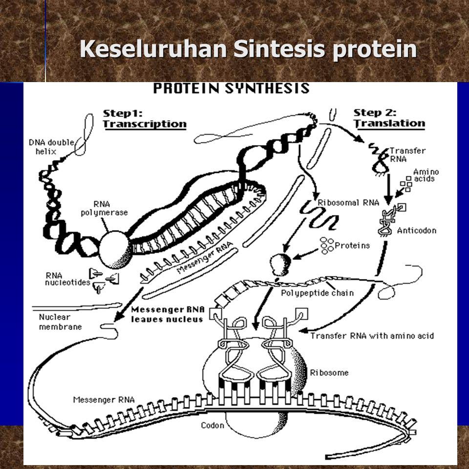 Keseluruhan Sintesis protein