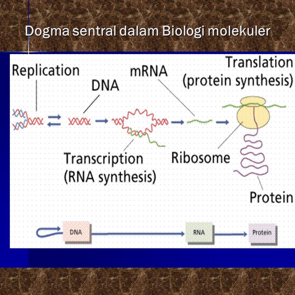 Perangkat yg diperlukan dalam sntesis protein  Ribosom  Enzym  Messenger RNA (mRNA) is the blueprint for construction of a protein.