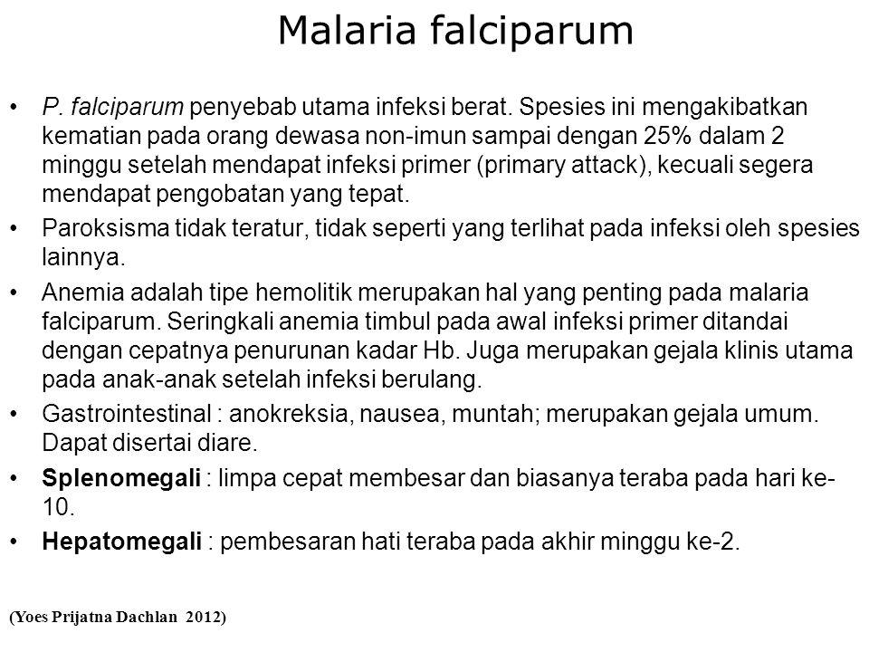 Malaria falciparum •P. falciparum penyebab utama infeksi berat.
