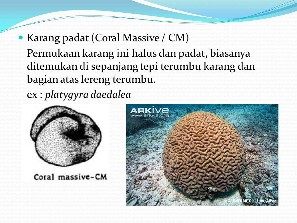  Karang padat (Coral Massive / CM) Permukaan karang ini halus dan padat, biasanya ditemukan di sepanjang tepi terumbu karang dan bagian atas lereng terumbu.