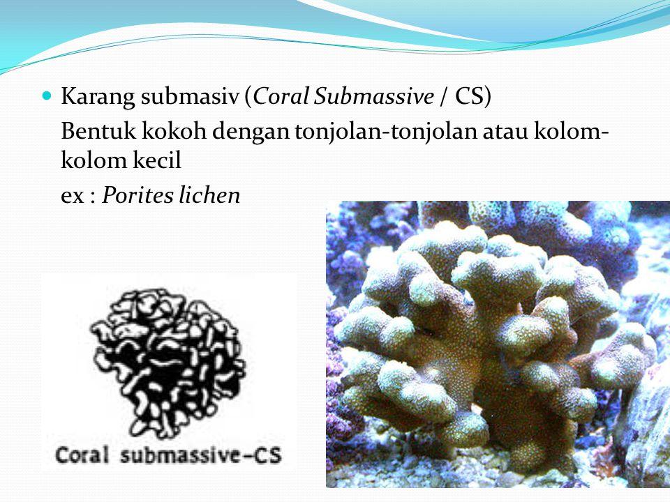  Karang submasiv (Coral Submassive / CS) Bentuk kokoh dengan tonjolan-tonjolan atau kolom- kolom kecil ex : Porites lichen