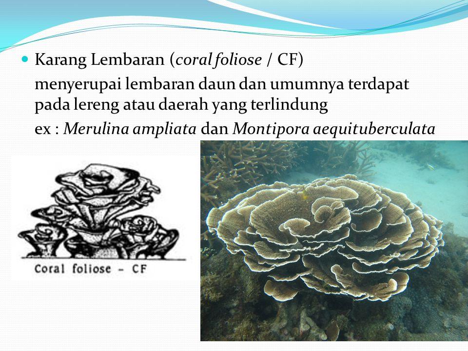  Karang Lembaran (coral foliose / CF) menyerupai lembaran daun dan umumnya terdapat pada lereng atau daerah yang terlindung ex : Merulina ampliata dan Montipora aequituberculata