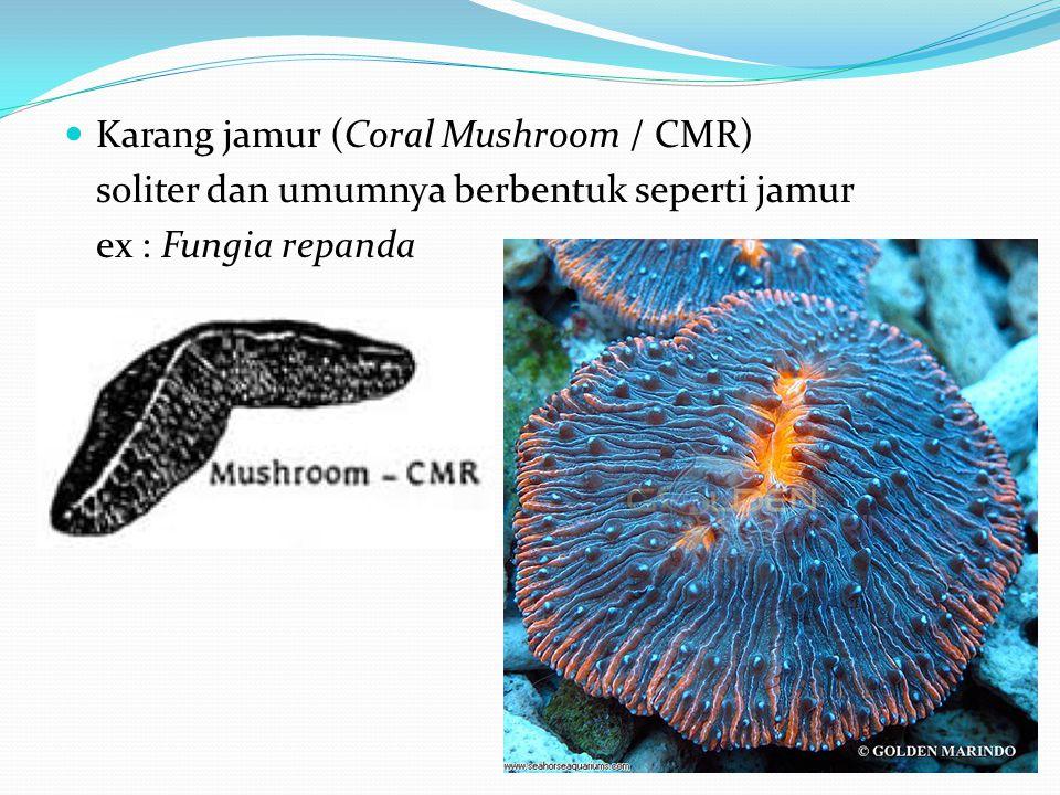  Karang jamur (Coral Mushroom / CMR) soliter dan umumnya berbentuk seperti jamur ex : Fungia repanda