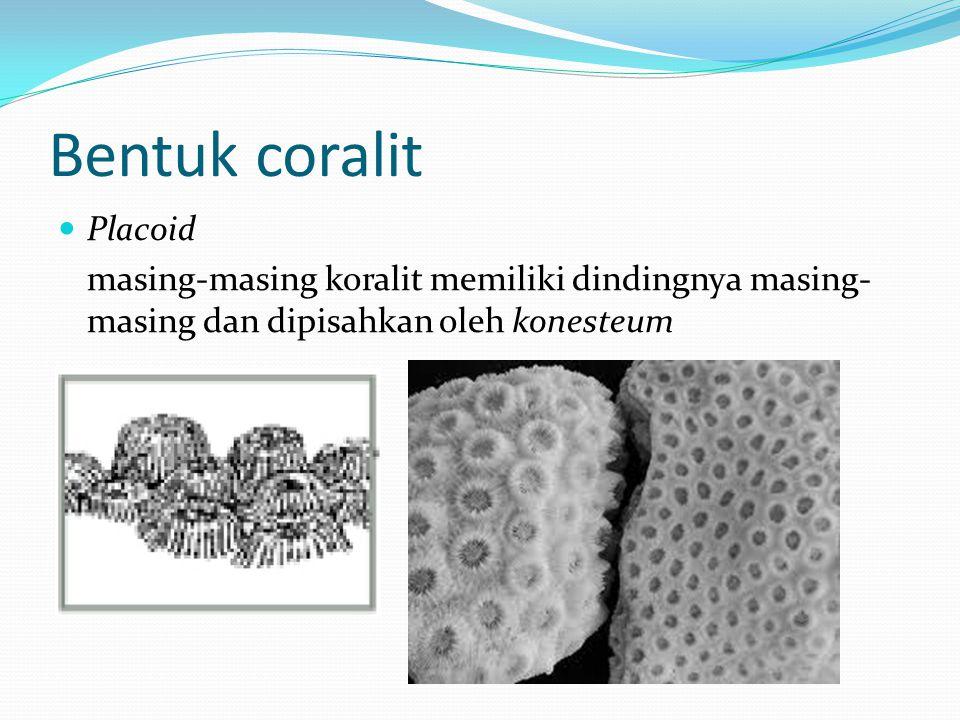 Bentuk coralit  Placoid masing-masing koralit memiliki dindingnya masing- masing dan dipisahkan oleh konesteum