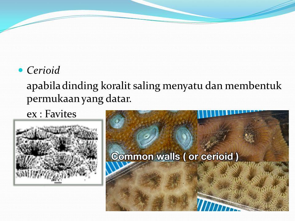  Cerioid apabila dinding koralit saling menyatu dan membentuk permukaan yang datar. ex : Favites