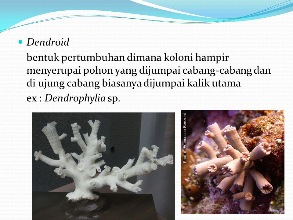 Dendroid bentuk pertumbuhan dimana koloni hampir menyerupai pohon yang dijumpai cabang-cabang dan di ujung cabang biasanya dijumpai kalik utama ex : Dendrophylia sp.