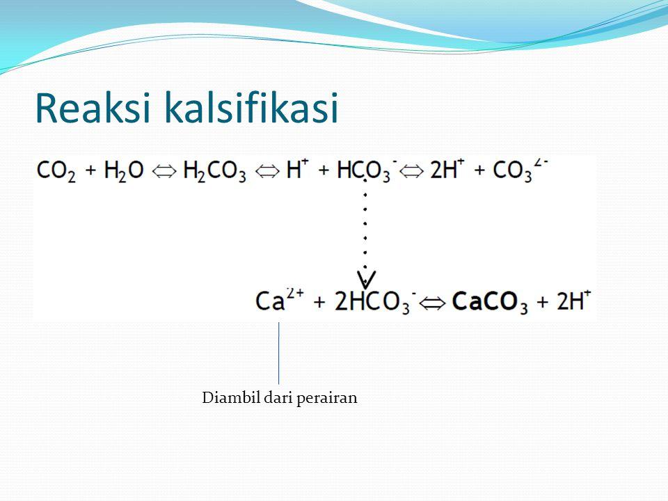 mitokondria (Bicarbonate) Enter from oral pore.