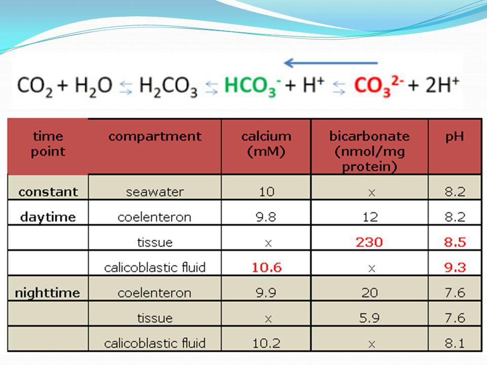 Kontribusi zooxantella dalam proses kalsifikasi  kontribusinyapada sumbangan energi bagi coral light-enhanced calcification  percepatan laju kalsifikasi dan pertumbuhannya dalam kompetisi dengan organisme bentik lain