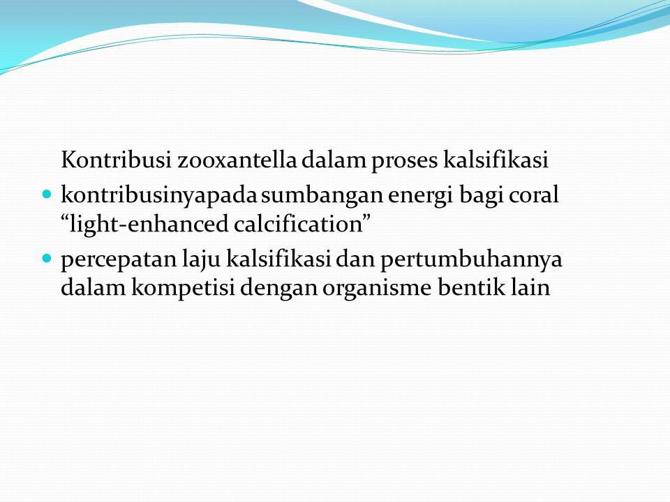 """Kontribusi zooxantella dalam proses kalsifikasi  kontribusinyapada sumbangan energi bagi coral """"light-enhanced calcification""""  percepatan laju kalsi"""