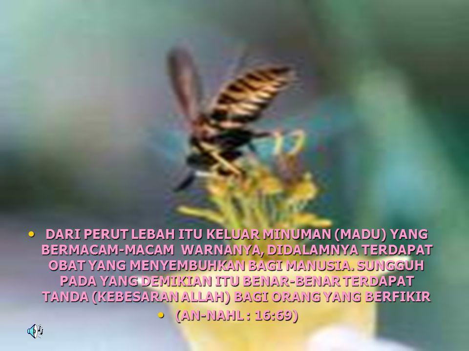 • DARI PERUT LEBAH ITU KELUAR MINUMAN (MADU) YANG BERMACAM-MACAM WARNANYA, DIDALAMNYA TERDAPAT OBAT YANG MENYEMBUHKAN BAGI MANUSIA. SUNGGUH PADA YANG