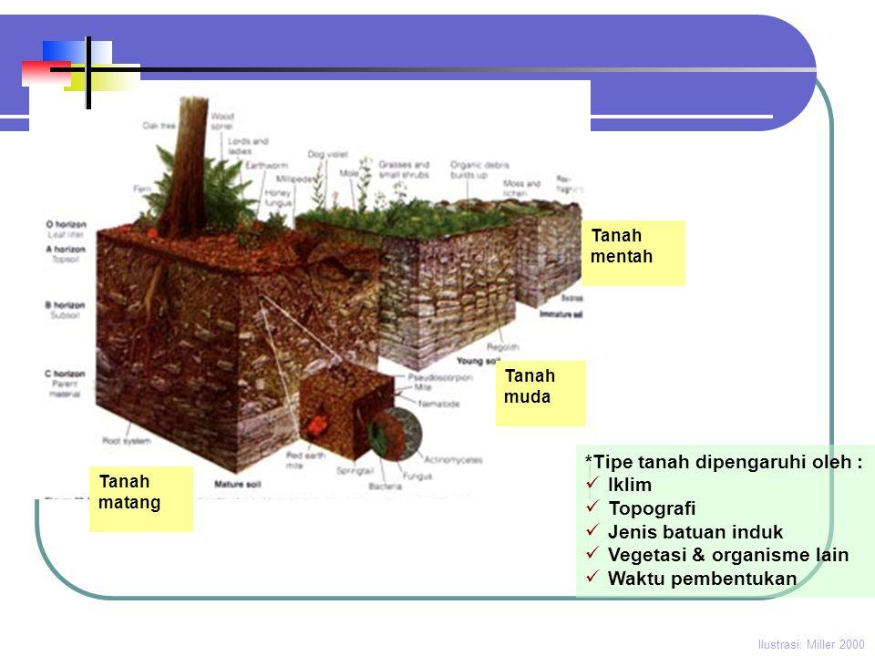 Tanah muda Tanah mentah Tanah matang Ilustrasi: Miller 2000 *Tipe tanah dipengaruhi oleh :  Iklim  Topografi  Jenis batuan induk  Vegetasi & organ