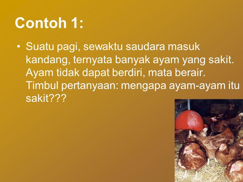 Contoh 1: •Suatu pagi, sewaktu saudara masuk kandang, ternyata banyak ayam yang sakit.