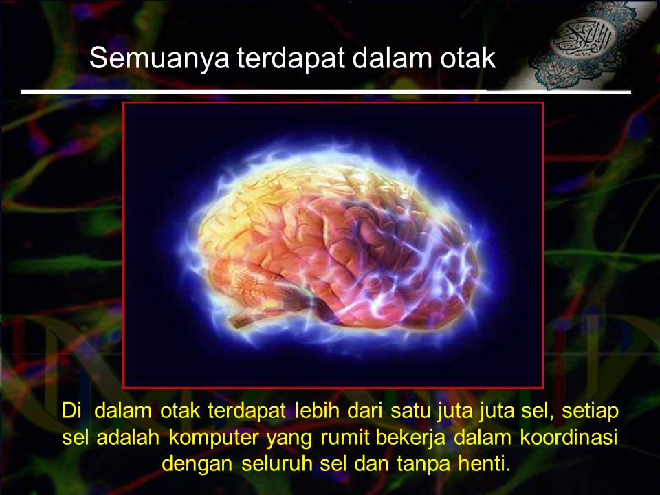 Semuanya terdapat dalam otak Di dalam otak terdapat lebih dari satu juta juta sel, setiap sel adalah komputer yang rumit bekerja dalam koordinasi dengan seluruh sel dan tanpa henti.