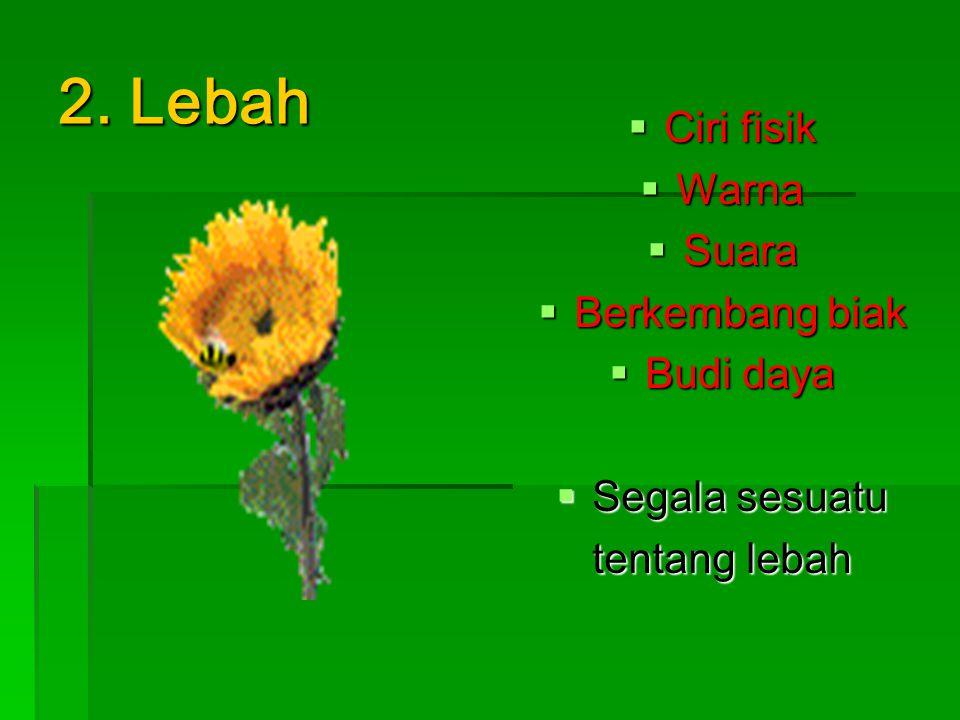 2. Lebah  Ciri fisik  Warna  Suara  Berkembang biak  Budi daya  Segala sesuatu tentang lebah