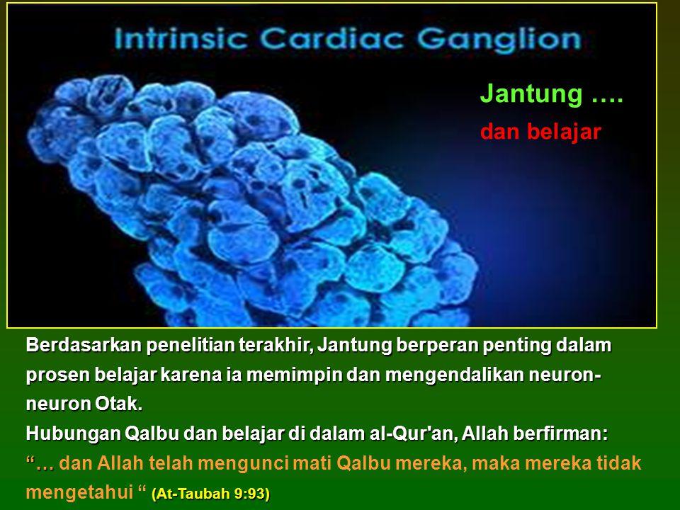 Berdasarkan penelitian terakhir, Jantung berperan penting dalam prosen belajar karena ia memimpin dan mengendalikan neuron- neuron Otak.