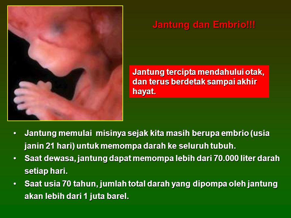•Jantung memulai misinya sejak kita masih berupa embrio (usia janin 21 hari) untuk memompa darah ke seluruh tubuh.