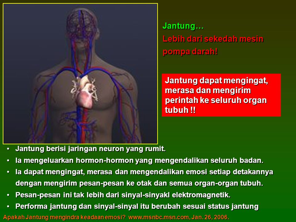 •Jantung berisi jaringan neuron yang rumit.
