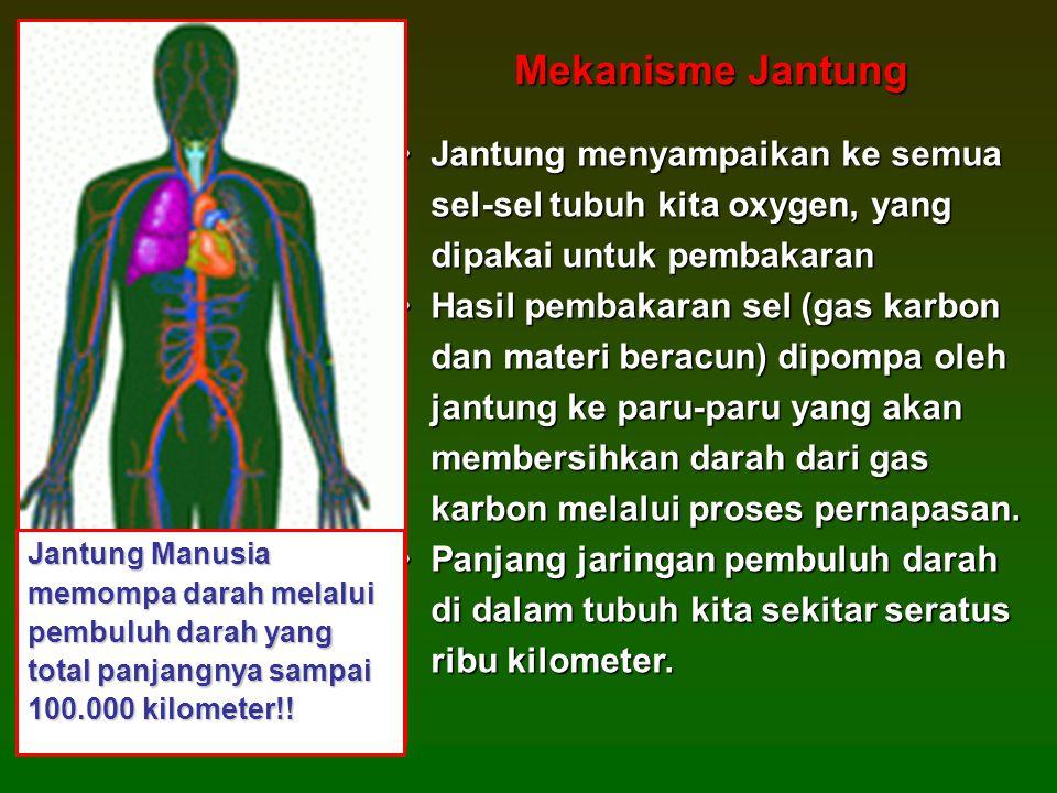 •Jantung menyampaikan ke semua sel-sel tubuh kita oxygen, yang dipakai untuk pembakaran •Hasil pembakaran sel (gas karbon dan materi beracun) dipompa oleh jantung ke paru-paru yang akan membersihkan darah dari gas karbon melalui proses pernapasan.