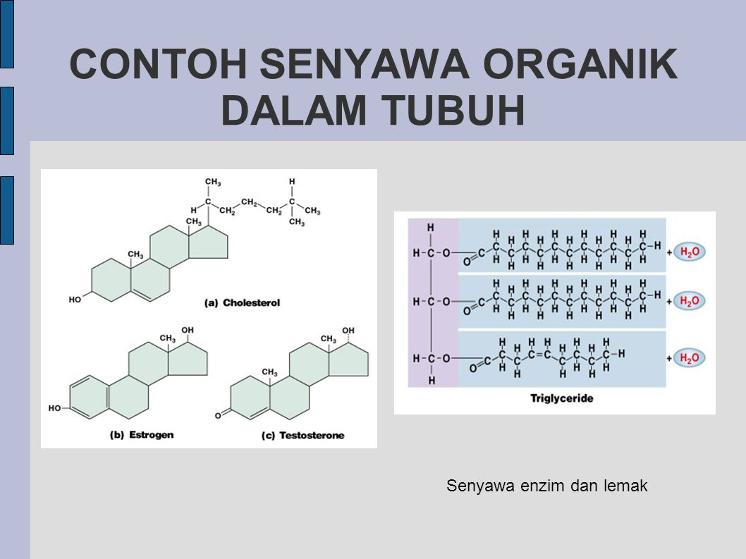 CONTOH SENYAWA ORGANIK DALAM TUBUH Senyawa enzim dan lemak