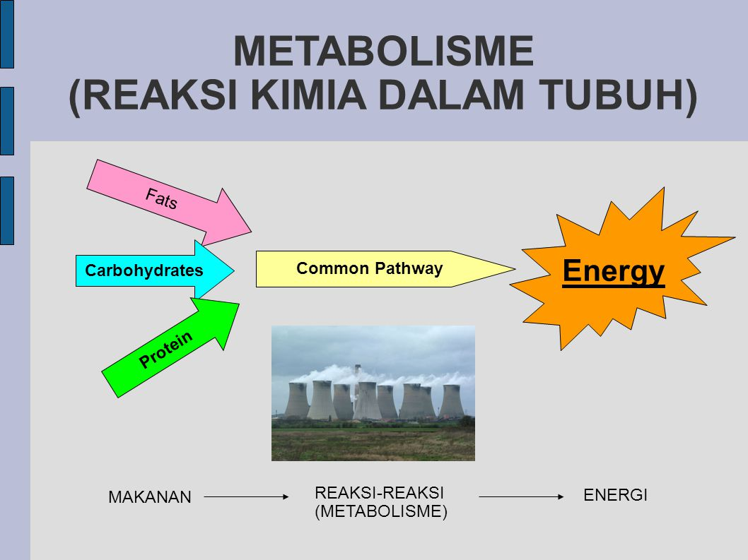 Common Pathway Energy Fats Carbohydrates Protein METABOLISME (REAKSI KIMIA DALAM TUBUH)‏ MAKANAN ENERGI REAKSI-REAKSI (METABOLISME)‏