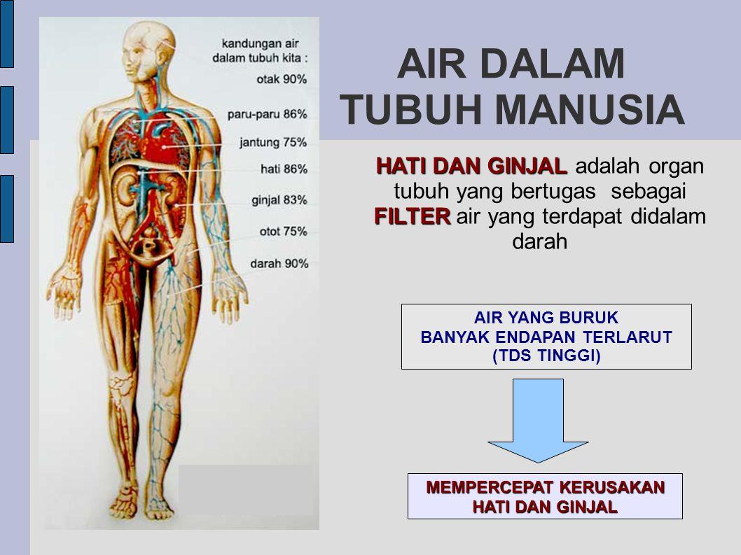 AIR DALAM TUBUH MANUSIA HATI DAN GINJAL FILTER HATI DAN GINJAL adalah organ tubuh yang bertugas sebagai FILTER air yang terdapat didalam darah AIR YAN