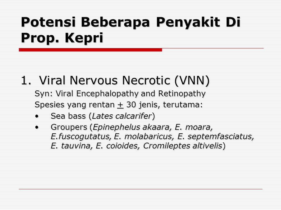 Potensi Beberapa Penyakit Di Prop. Kepri 1.Viral Nervous Necrotic (VNN) Syn: Viral Encephalopathy and Retinopathy Spesies yang rentan + 30 jenis, teru