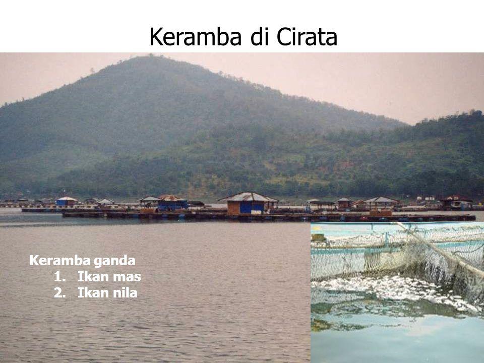 Keramba di Cirata Keramba ganda 1.Ikan mas 2.Ikan nila