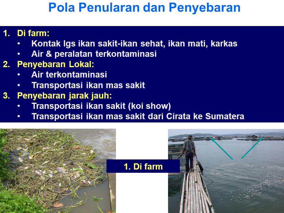Pola Penularan dan Penyebaran 1.Di farm: •Kontak lgs ikan sakit-ikan sehat, ikan mati, karkas •Air & peralatan terkontaminasi 2.Penyebaran Lokal: •Air