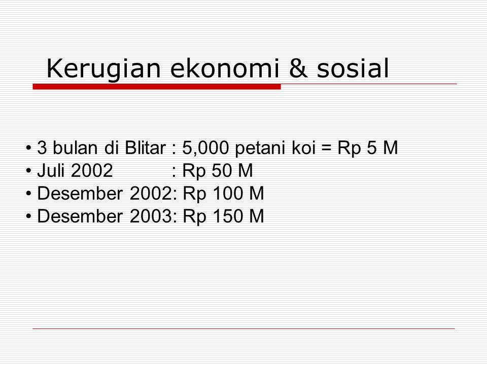 Kerugian ekonomi & sosial • 3 bulan di Blitar: 5,000 petani koi = Rp 5 M • Juli 2002: Rp 50 M • Desember 2002: Rp 100 M • Desember 2003: Rp 150 M