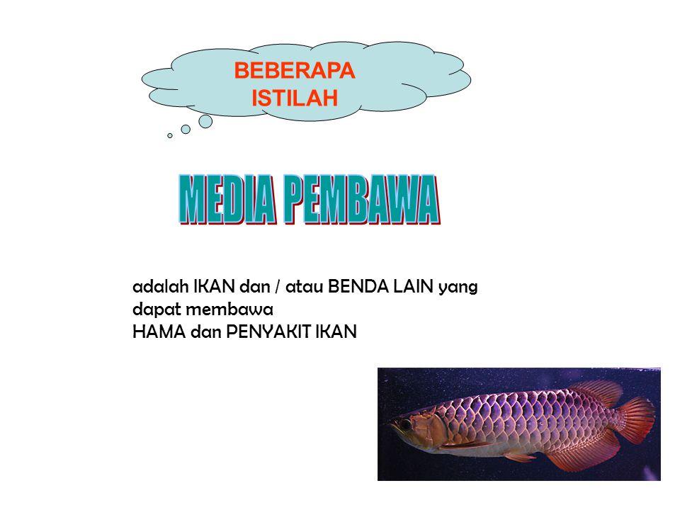 Gejala klinis: • terutama menyerang benih – ikan kecil kurang 20 g • merusak sistem syaraf  berenang abnormal, muter-muter, membalik • Limpa membesar