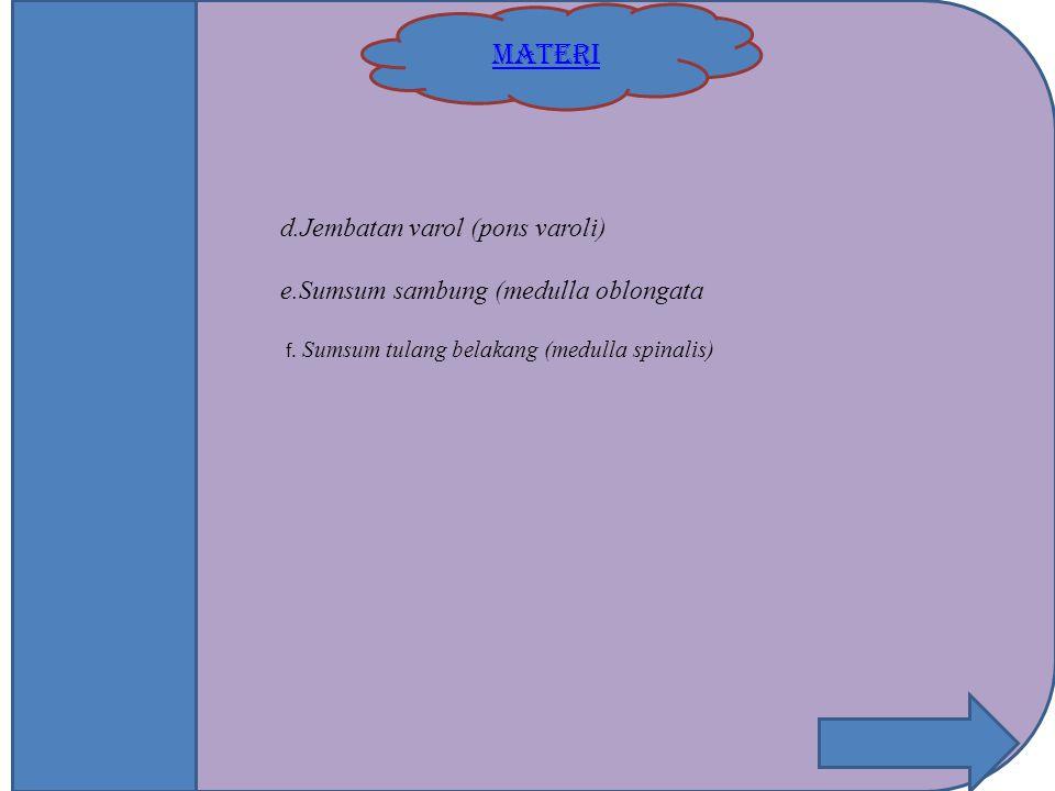 MATERI d.Jembatan varol (pons varoli) e.Sumsum sambung (medulla oblongata f. Sumsum tulang belakang (medulla spinalis)
