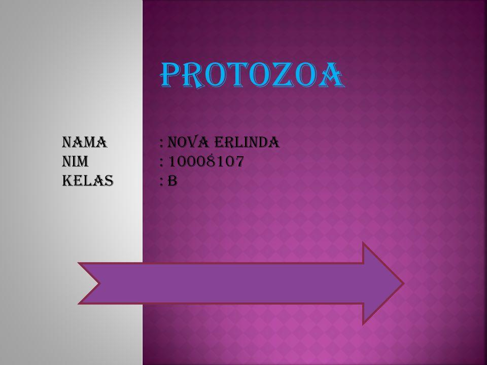 PROTOZOA Nama: Nova erlinda Nim: 10008107 Kelas: B