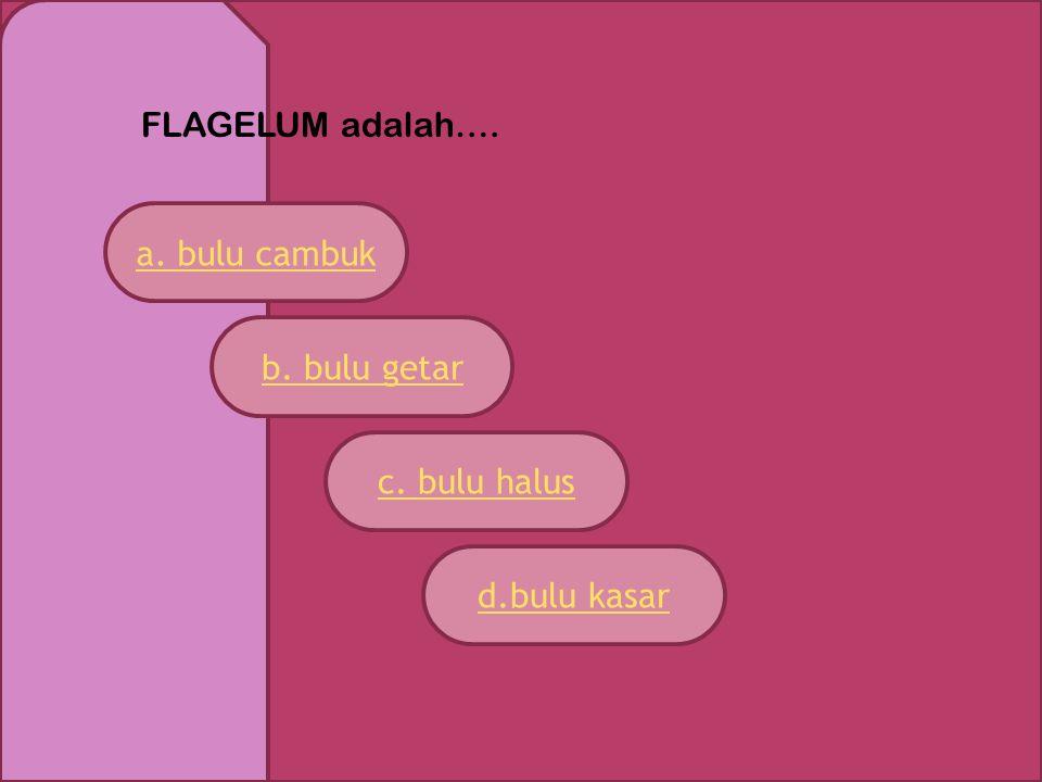 FLAGELUM adalah…. a. bulu cambuk c. bulu halus d.bulu kasar b. bulu getar