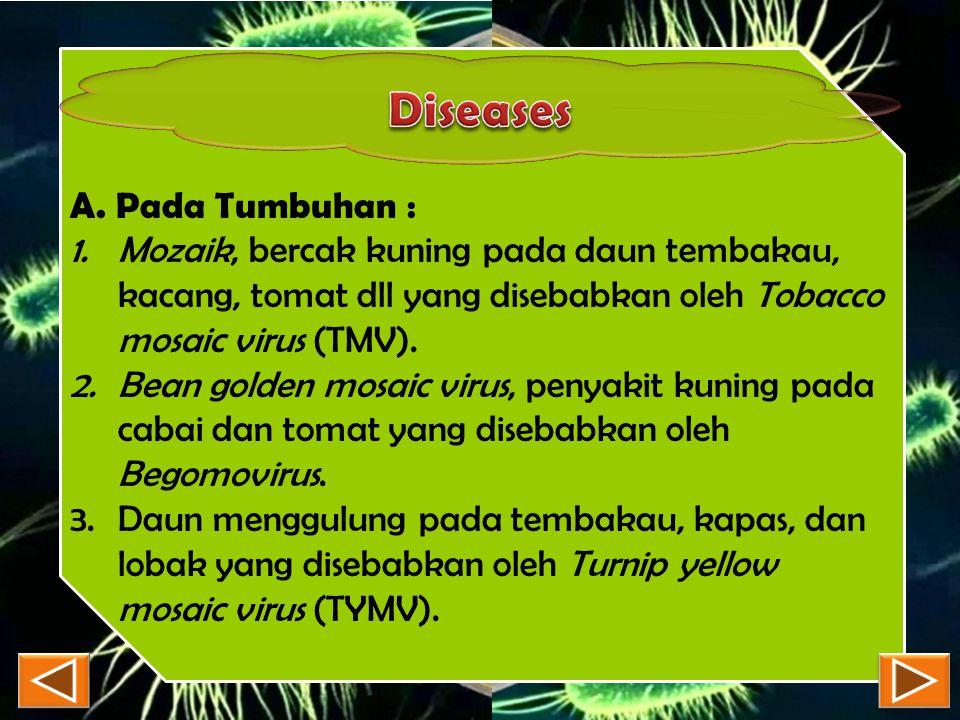 A. Pada Tumbuhan : 1.Mozaik, bercak kuning pada daun tembakau, kacang, tomat dll yang disebabkan oleh Tobacco mosaic virus (TMV). 2.Bean golden mosaic