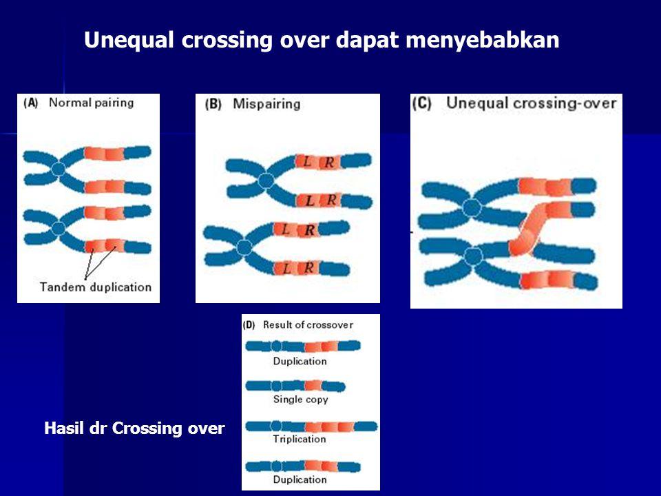 Unequal crossing over dapat menyebabkan Hasil dr Crossing over