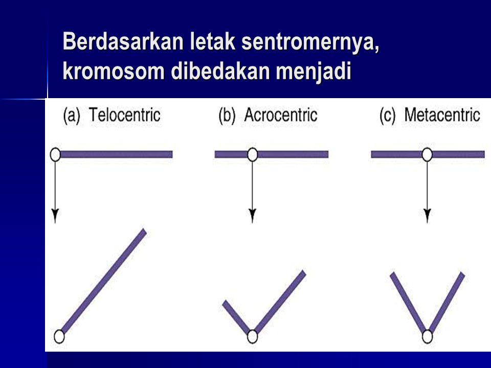 Berdasarkan letak sentromernya, kromosom dibedakan menjadi