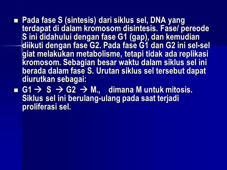  Pada fase S (sintesis) dari siklus sel, DNA yang terdapat di dalam kromosom disintesis. Fase/ pereode S ini didahului dengan fase G1 (gap), dan kemu