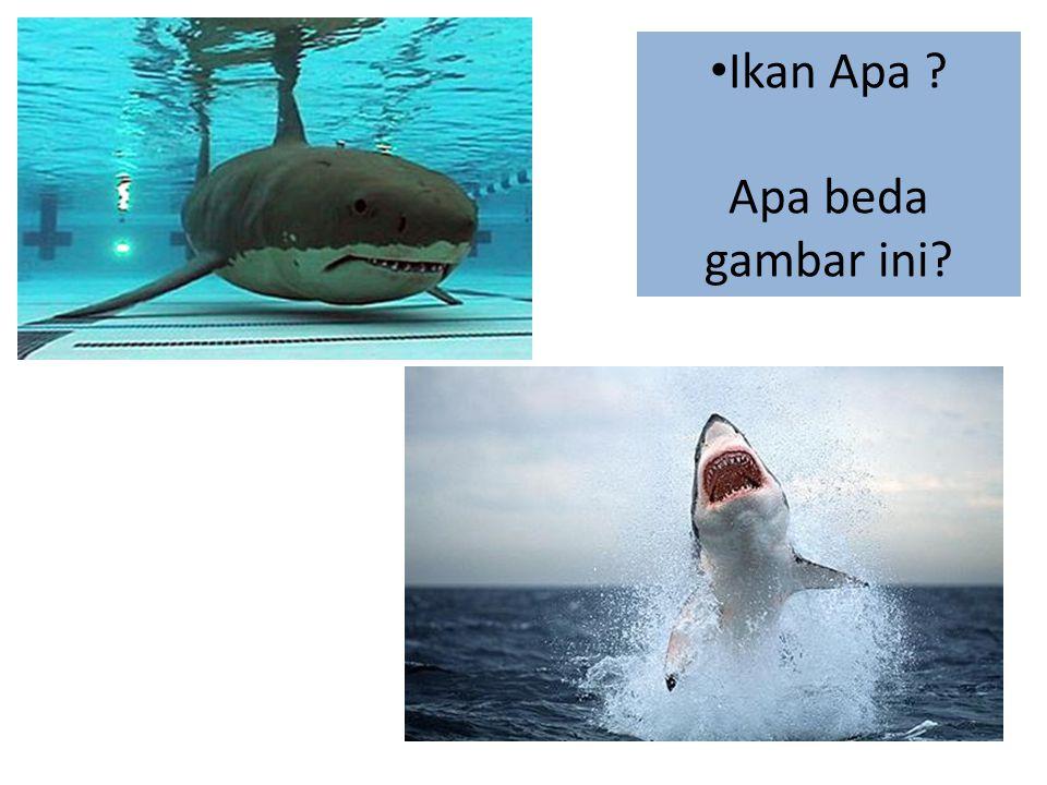 • Ikan Apa ? Apa beda gambar ini?