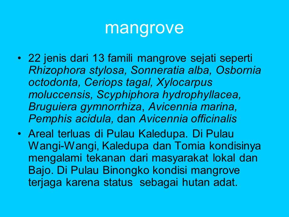 mangrove •22 jenis dari 13 famili mangrove sejati seperti Rhizophora stylosa, Sonneratia alba, Osbornia octodonta, Ceriops tagal, Xylocarpus moluccensis, Scyphiphora hydrophyllacea, Bruguiera gymnorrhiza, Avicennia marina, Pemphis acidula, dan Avicennia officinalis •Areal terluas di Pulau Kaledupa.