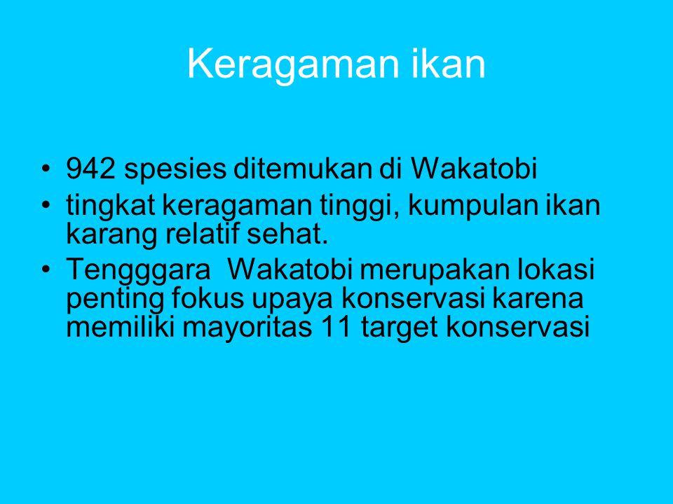 Keragaman ikan •942 spesies ditemukan di Wakatobi •tingkat keragaman tinggi, kumpulan ikan karang relatif sehat.